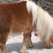 Буланый пони))